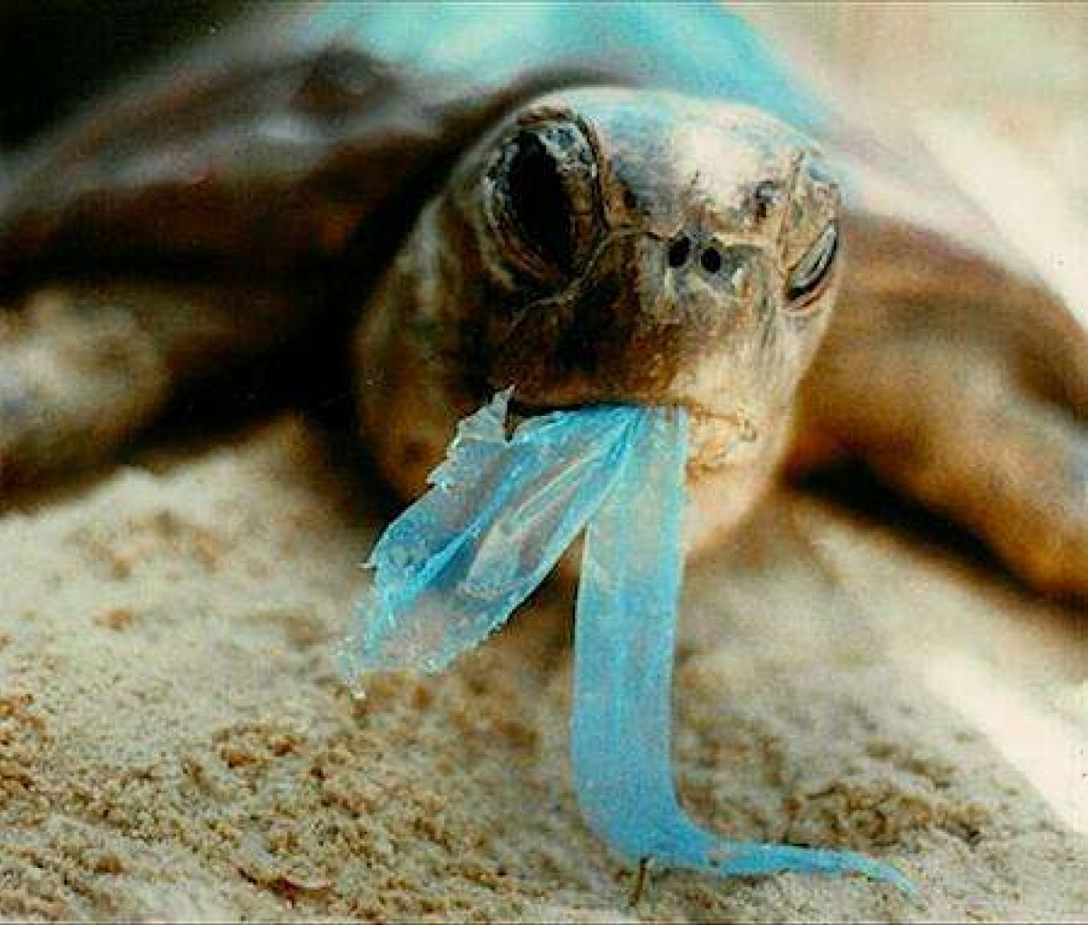 Plastic is not fantasticPlastic will replace fish in 35 years
