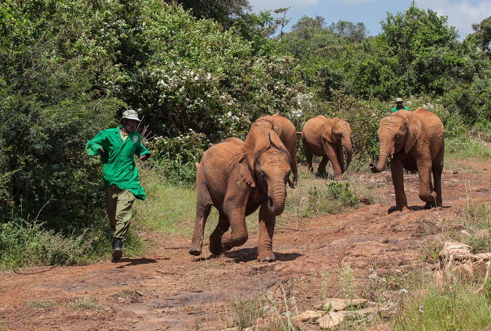 Elephants transmit information through the groundResearchers found out that animals use signals similar to seismic
